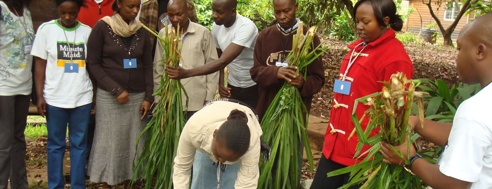 Sarah-Itambo-cuting-napier-for-Making-Silage-duringNEFSALF-training-course-of-April-2012-